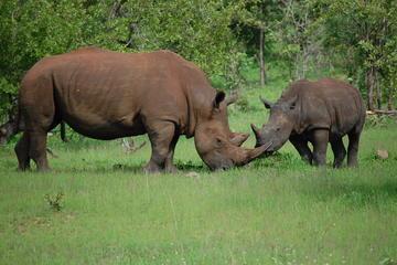Half-Day Nature Walk in Mosi-Oa-Tunya National Park from Livingstone