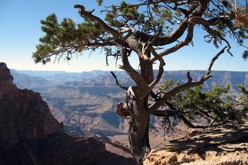Book Grand Canyon Hike with Sedona and Flagstaff Hotel Pickup on Viator