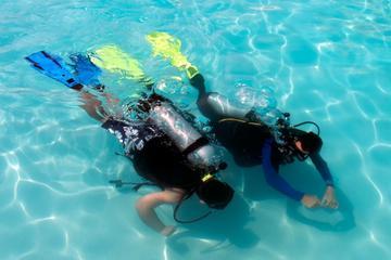 Programma di immersione della PADI a Punta Cana