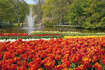 Combinado de Ámsterdam: Evite las colas en los jardines Keukenhof y...
