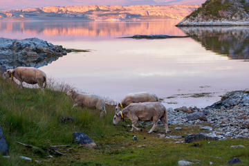 Fjord-Ausflug inklusive arktischer Berg- und Meer-Szenerie ab Tromsø