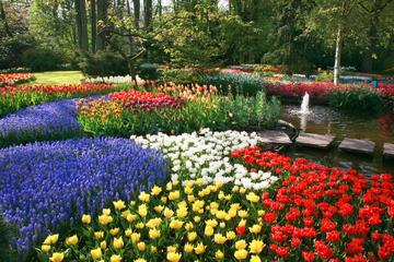 Amsterdam: visite des jardins de Keukenhof et des champs de tulipes