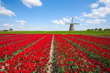 Giro turistico di un giorno in Olanda