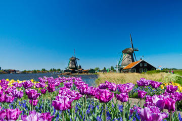 Halvdagsresa till Zaanse Schans väderkvarnar, Marken och Volendam ...