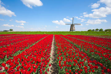 Heldagstur med sightseeing i Holland