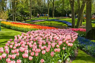 Hoppa över kön: Rundtur i parken Keukenhof och besök på en tulpangård ...