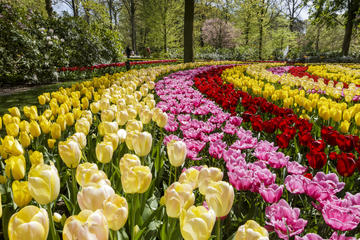 Keukenhof Garden Entrance with Transfer from Amsterdam