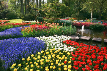 Keukenhof Gardens and Tulip Fields...
