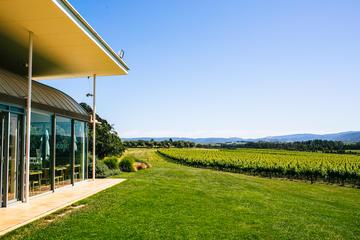 Excursion dans les domaines vinicoles...
