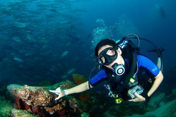 """Curso """"Discover Scuba Diving"""""""