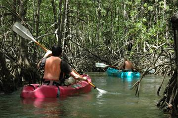 Damas Island Mangrove Kayaking Tour from Jacó