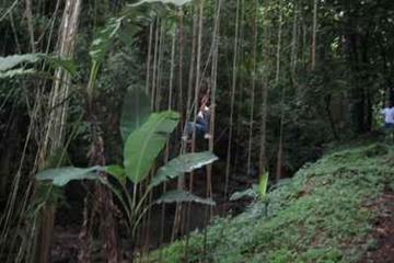St Kitts Rainforest Nature Tour