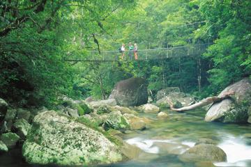 Visita a Daintree y Cape Tribulation...