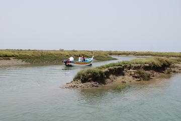 Viagem de barco guiada para observação de pássaros na Ria Formosa...