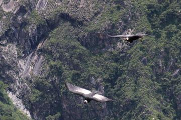 Apurimac Canyon with Condor Viewing from Cusco
