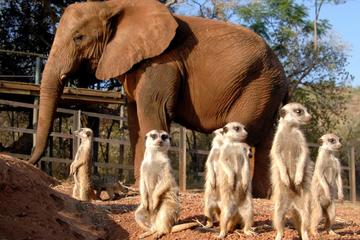 Elephant Sanctuary Tour from Johannesburg or Pretoria