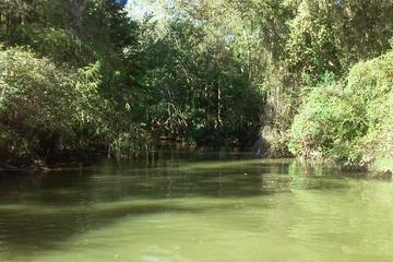 Book Cypress Swamp Kayak Adventure on Viator