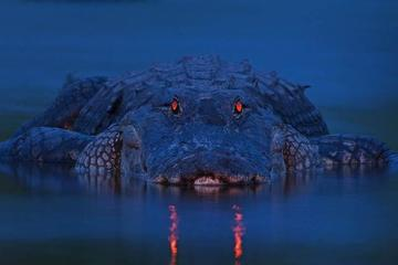 Day Trip Gators After Dark Tour near Spanish Fort, Alabama