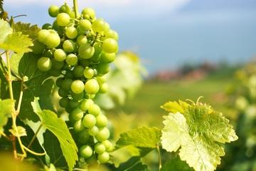 Una passione per il vino - Tour vinicolo privato ad Azeitao