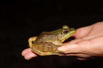 Night Tour at Cerro Coronel Biological Reserve