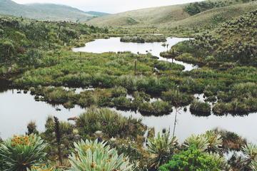 Cundinamarca Community Tour: Rural Culture and Wildlife