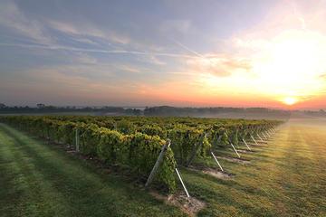 Excursão particular: vinhos em...
