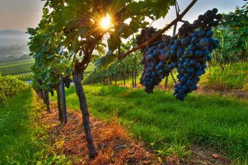 Excursão vinícola particular...
