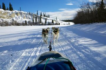 Half-Day Dog Sledding: The Takhini Express