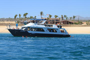 Los Cabos Snorkel Lunch Cruise with Open Bar