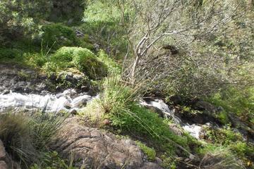 Las Palmas Shore Excrusion: Trekking Tour in Gran Canaria