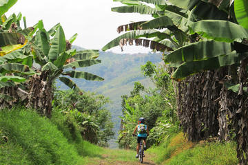 7-Day Biking Tour: Coffee, Cultural...