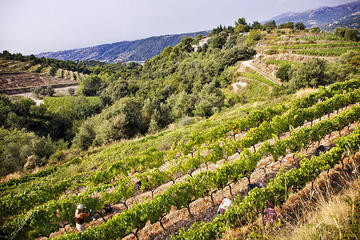 4-Hour Provence Organic Wine Tasting Tour from Nice