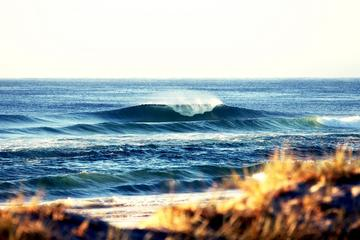 7-Day Byron Bay, Evans Head and Moonee Beach Surf Safari from...