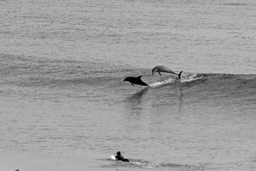 Fuga para surfar em Tweed Coast com pernoite em acampamento saindo de...