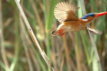 Full-Day Birding Photography Tour on the Garden Route