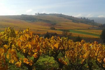 Beaujolais Half Day Wine Tasting Tour