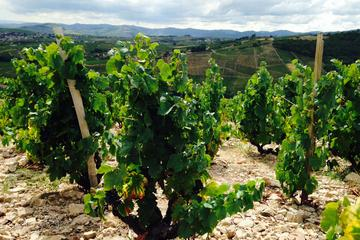 Private Tour: Beaujolais Day Tour from Lyon