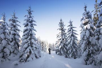Quebec Nordic Backcountry Skiing Tour
