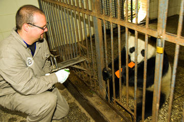 One-Day Dujiangyan Giant Panda Base Volunteering and Irrigation System Tour