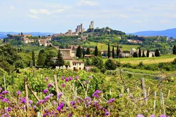 Excursión de un día a en grupo a la región vinícola de la Toscana...