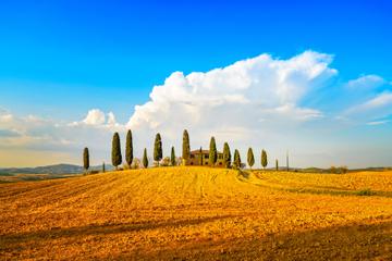 Excursión de un día en grupo a la región vinícola de la Toscana desde...