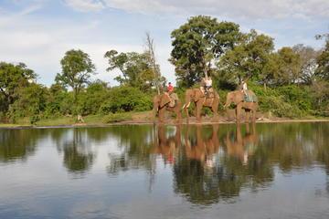 Elephant Back Safari from Victoria Falls