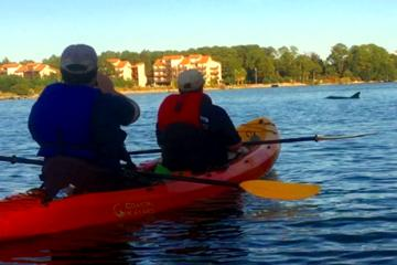 Day Trip Dolphins at Sunset Kayak Tour near Gulf Shores, Alabama