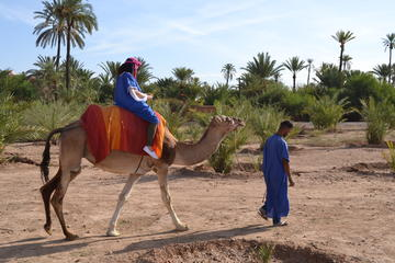 Desert Camel Ride in Marrakech