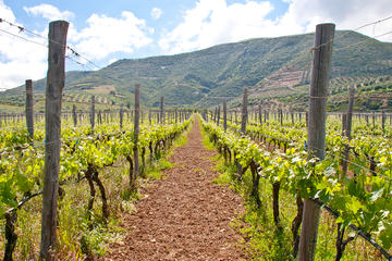 Wine and Olive Trails of Crete