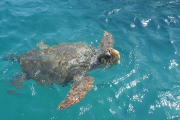 Turtle Spotting Cruise in Zakynthos