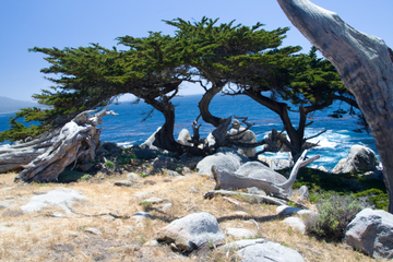 2-tägiger Ausflug nach Monterey, Carmel und Pebble Beach ab San...