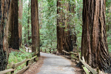 Muir Woods and Sausalito Tour plus...