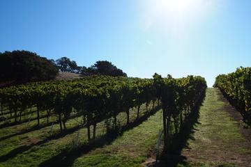 Private Führung: Tagesausflug von San Francisco zur Weinregion Napa...