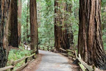Rundtur till Muir Woods och Sausalito, samt kryssning i bukten